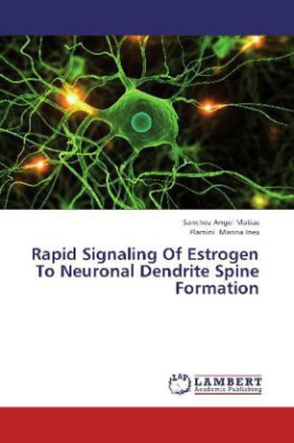 Rapid Signaling Of Estrogen To Neuronal Dendrite Spine Formation